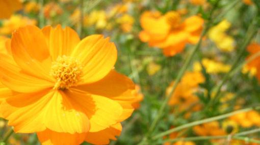 Orange08