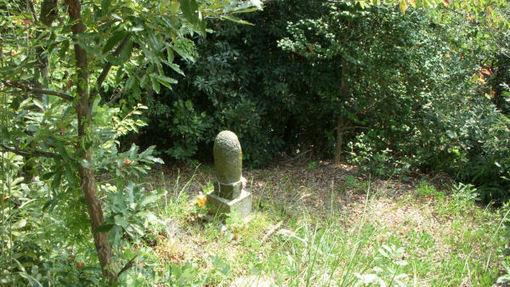 Shikoku132